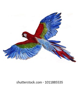 Beautiful  watrecolor illustration of flying tropical ara macaw  isolated on white background
