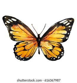 beautiful yellow butterfly,watercolor,isolated on a white