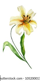 Beautiful yellow lily flower on a stem with green leaves. Watercolor painting. Floral illustration. Hand painted. Isolated on white background. Vertical orientation.