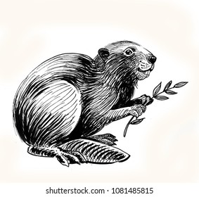 Beaver with a tree branch. Ink black and white drawing