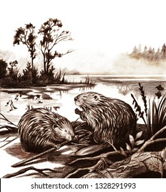 beavers in the forest and lake