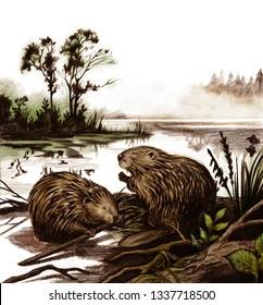 beavers hand drawing
