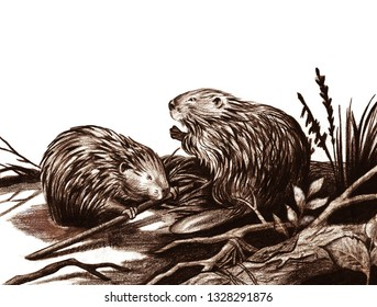 beavers on the river