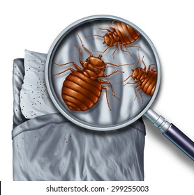Bed bug or bedbug infestation concept as a magnification close up of  parasitic insect pests on a pillow and under the sheets as a hygiene symbol and metaphor of parasite danger inside a mattress.