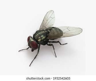 Bee fly 3d render modelling images