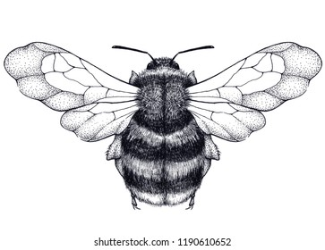 Bee tattoo. Dotwork tattoo. Mystical symbol of diligence, economy, purity, immortality, fertility and chastity. Black and white tattoo