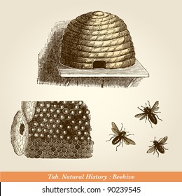 "Beehive - Vintage engraved illustration - ""Cent récits d'histoire naturelle"" by C.Delon published in 1889 France"