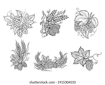 Beer hops set sketch engraving raster illustration. T-shirt apparel print design. Scratch board imitation. Black and white hand drawn image.