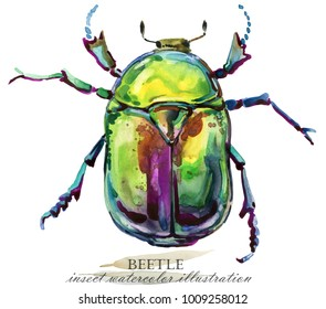 Beetle. bug Insect watercolor illustration.