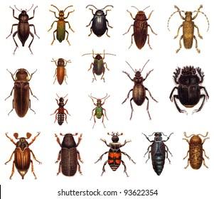 Beetle collection / vintage illustration from Meyers Konversations-Lexikon 1897