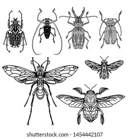 Beetles isolated on white background. Goliath, Harlequin, rhinoceros beetle and others. Realistic drawing of bugs.