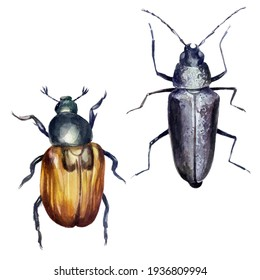 Beetles set. Watercolor illustration. Black beetles with mustaches painted in watercolor.