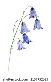 Bell flower watercolor illustration