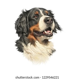 Bernese Mountain Dog isolated on white background. Realistic Portrait of cute Large Dog. Animal art collection: Dogs. Hand drawn pet illustration. Design template for pet shop, pillow, banner