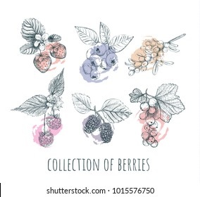 Berries set. collection of berries. Berry sketch illustration