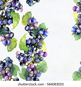 Berry pattern. Black currant. Watercolor. Illustration