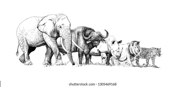 Big african five animal. Hand drawn illustration. Collection of hand drawn illustrations (originals, no tracing)