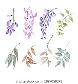 Big  botanical set watercolor  wisteria elements .Wild, forest herb, flowers, branches. illustration isolated on white background, green leaves. Hand painted floral elements coleccion.