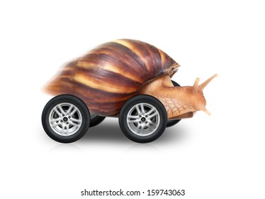 Big brown snail is fast driving on wheels isolated on white background
