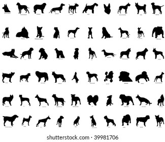 Big collection  silhouettes of dogs with breeds description