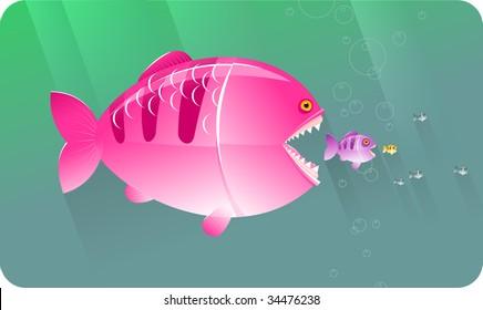 Big fat predator fish eat small fish.