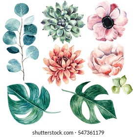 Big flower collection.Watercolor hand drawn illustration with plants.Succulents, anemones,monstera,eucalyptus and other.Perfect for any designs, t-shirts, phone cases, bags, and other.Floral clip-art.