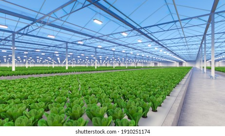 Big industrial greenhouse interior. Hydroponic indoor vegetable plant factory. Green salad farm. Concrete floor. 3D render