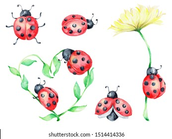 Big ladybug set, green and yellow flowers; watercolor hand draw illustration; with white isolated background