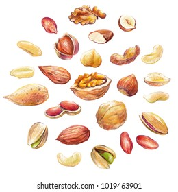 Big nut set hand drawn with colored pencil. Different nut types isolated on white background.