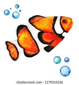 Big Orange Clownfish Handdrawing Watercolor Illustration a High Resolution