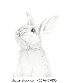 Big Rabbit. Easter Bunny. Pencil Draw. Nursery Wall Art. Kids Art Gift. Forest animal. White background