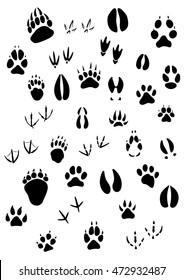 Big set of animal footprints include mammals and birds