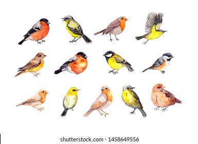 Big set of birds - robin, tit, finch, sparrow, other small wild and domestic bird.  Watercolor collection
