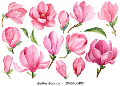 Big set of blooming magnolia isolated on white background. Hand draw watercolor illustration