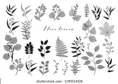 Big set of branches and leaves, fall, spring, summer. Vintage botanical illustration,  floral elements in black design on white background