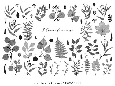 Big set of branches and leaves, fall, spring, summer. Botanical illustration,  floral elements in black design on white background
