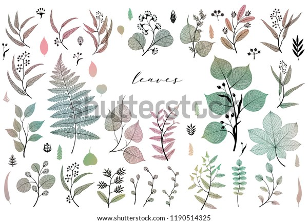 Big set of branches and leaves, fall, spring, summer. Vintage botanical illustration in colorful design