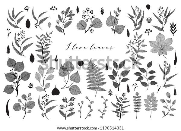 Big set of branches and leaves, fall, spring, summer. Botanical illustration,  floral elements in black design on white background