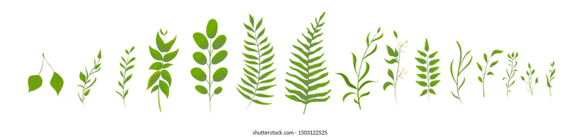 Big set collection of green forest fern, tropical green. Isolated Natural leaves.