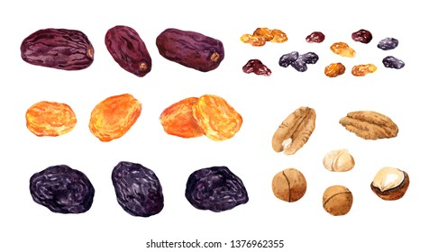 Big set of dried fruits. Dates fruit, raisins, prune, apricot, nuts. Watercolor collection
