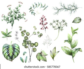 Big Set  elements - herbs, leaf, berry. collection garden and wild herb, leaves, branches, watercolor illustration isolated on white background, eucalyptus, exotic, tropical leaf. Green