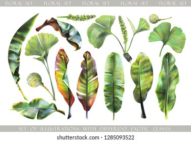 Big set with floral exotic leaves for your design. Illustration of  banana leaves and ginkgo biloba painted with colored pencils.