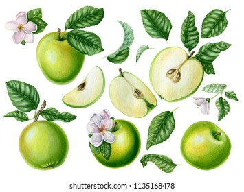 Big set with  green apples, leaves and flowers. Botanical illustration. Can be used for postcards, patterns, wallpaper, textile and other objects.