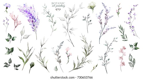 Big Set oil painting elements - wildflowers, herbs, leaf. collection garden and wild, herb, flowers, branches.  illustration isolated on white background, forest  leaf. Botanic