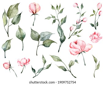 Big set with watercolor botanical illustrations isolated on white background. Hand painted pink flowers and green leaves