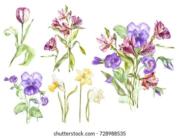 Big Set Watercolor collection with plants elements - leaf, flowers. Botanical illustration isolated on white background. Floral nature. Spring flowers Pansy and Alstroemeria, narcissus and tulip.
