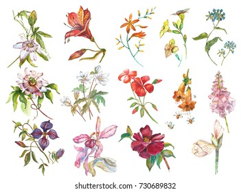 Big Set Watercolor collection with plants elements - leaf, flowers. Botanical illustration isolated on white background. Floral nature.