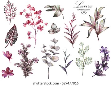 Big Set watercolor elements - herbs, leaf. collection garden and wild herb, leaves, branches, illustration isolated on white background, eucalyptus, exotic, tropical leaf. Purple and pink