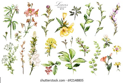 Big Set watercolor elements - wildflowers, herbs, leaf. collection garden and wild, forest herb, flowers, branches.  illustration isolated on white background, exotic  leaf. Berry