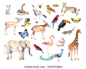 Big set of wild animals, birds, insects - zoo, wildlife. Giraffe, cheetah, toucan, flamingo, elefant, deer, parrot, butterflies, other wild life animal.  Watercolor